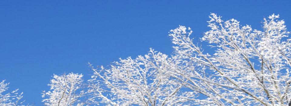 Snow-tree-960-250