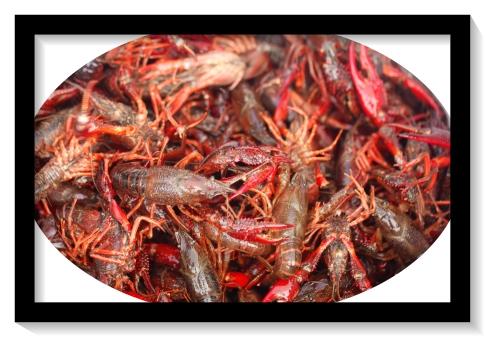 제14회 선교기금 마련 Crawfish Boil 행사